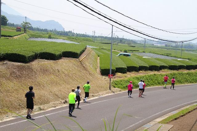 91bb619b9a0c6 第31回新茶・大野岳マラソンは、頴娃運動公園をスタートし、緑広がる茶畑やすばらしい景観を楽しみながら大野岳(466m)の山頂までを往復する雄大なコースとなっており  ...